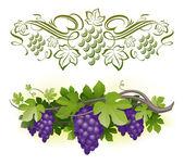 Ripe grapes on the vine & decorarative calligraphic vine — Stock Vector