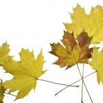 Autumn leaves — Stock Photo #6426445