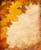 Autumn leaves — Стоковое фото