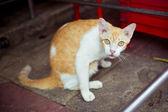 Street cat sitting on the floor — Stock Photo