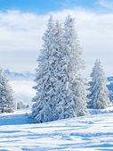 Winter in alps — Stock Photo