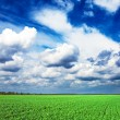Field and beautiful sky — Stock Photo