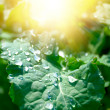 Leaf in sun rays — Stock Photo