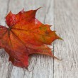 Stock Photo: Maple leaf
