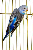 Parrot on a lattice cage — Stock Photo