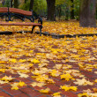 Autumn park. Rainy weather — Stock Photo #5944799
