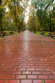 Alleyway with paved road to autumn park — Stockfoto