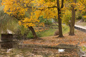 Lake with a swan in autumn park — Stockfoto