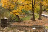 Jezioro z łabędziem w parku jesień — Zdjęcie stockowe