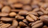 Coffee grain close up — Stock Photo