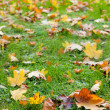 Autumn leaf in a green grass — Stock Photo #6189716