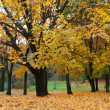 Autumn tree with yellow foliage — Stock Photo