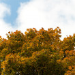 Autumn tree with yellow foliage on a background of the blue sky — Stock Photo #6189770