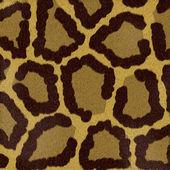 Textures animal — Stock Photo