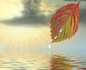 Autumn leaf above water in beams yellow sunset — Stock Photo