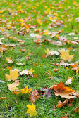 Autumn leaf in a green grass — Stock Photo