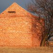 Brick building and dry tree — Stock Photo