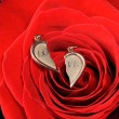 Broken gold heart in a red rose - Foto Stock