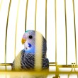 Parrot in cage — Stock Photo #6190740