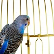 Parrot on a lattice cage - Stock Photo