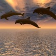 Dolphin red sunset — Stock Photo