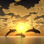 Dolphin yellow sunset — Stock Photo