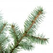 Branch of a fur-tree — Stock Photo #6193033