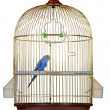 Parrot in cage — Stock Photo