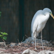 Heron - Stock Photo
