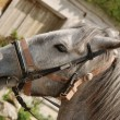 Horse of grey colour — Stock Photo