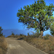 Stock Photo: Lonely tree on rural road