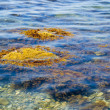 Stock Photo: Picturesque seseaweed