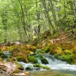 Mountain river — Stock Photo #6196820