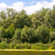 Picturesque forest and the river - Lizenzfreies Foto
