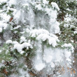 Snow on a fur-tree — 图库照片