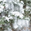 图库照片: Snow on a fur-tree