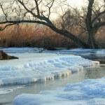 strom na pobřeží řeky zimní — Stock fotografie