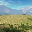 Vineyards at bottom of mountain 2 — Stock Photo