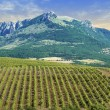 Vineyards at bottom of mountain — Stock Photo #6199078