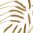 Wheat set abstract — Stock Photo