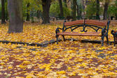 Autumn park. Rainy weather — Stock Photo