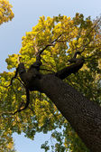более осенние деревья — Стоковое фото
