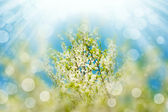 Blossoming branches tree with sun light — Stockfoto