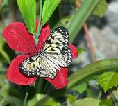 Butterflies 8 — Stock Photo