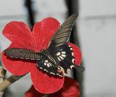 蝶と赤い花 — ストック写真