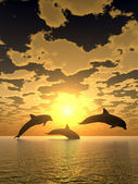 Dolphin yellow sunset — Stock Photo