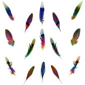 Feather set — Stock Photo