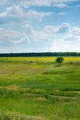 Field and tree — Stock Photo