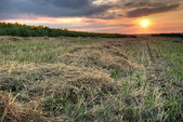 Field with hay — Stock Photo