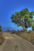 Lonely tree on rural road — Stock Photo